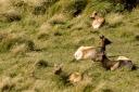 Elk Preserve